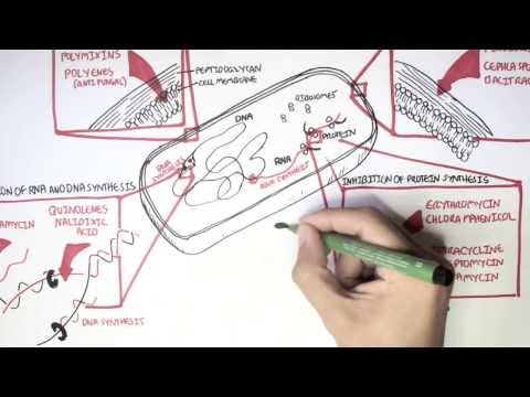 Microbiology - Antibiotics Mechanisms of Action