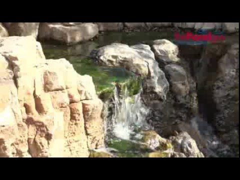Water Gardens - Algae Control