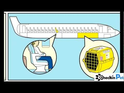 How to Fly with your Pet www.checkinpet.com