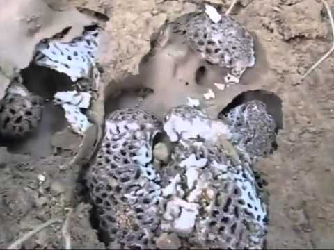 Destroying A Termite Mound Then Look Inside At Its Bizarre Construction