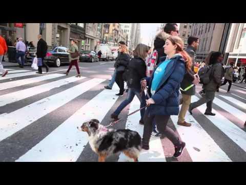 Dog Walking in New York City