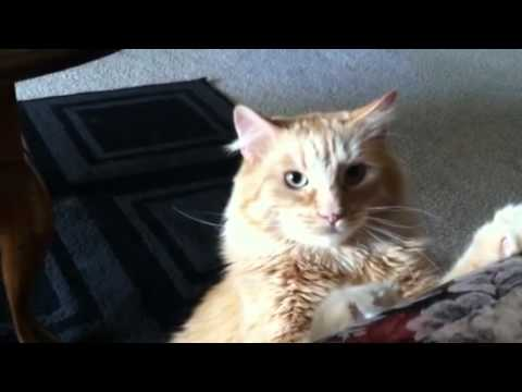 Kitty's eyes dilate HUGE when he's playing!