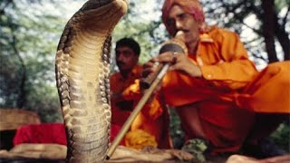 Snake Charmers in India Hypnotize Snakes