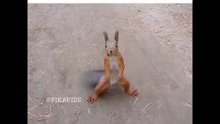 Как танцует белка