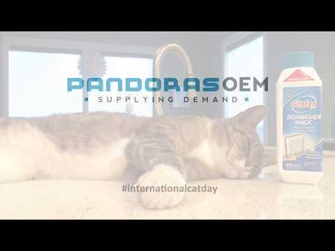 International Cat Day | Pandoras OEM