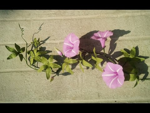 ABC TV | How To Make Cairo Morning Glory Paper Flowers From Crepe Paper - Craft Tutorial