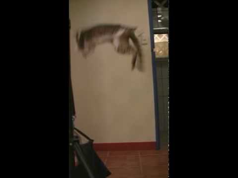 Cat catches bat out of the air (rotated)