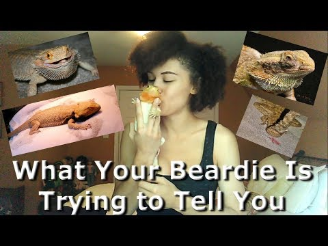 What Your Beardie Is Trying To Tell You Pt 2  Sick dragon VS. Extra characteristics