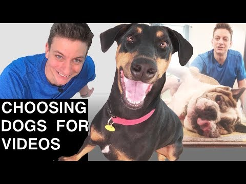 Choosing Dogs for Videos