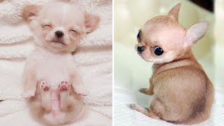 Cute baby animals Videos Compilation cutest moment of the animals 2020 - Soo Cute! #