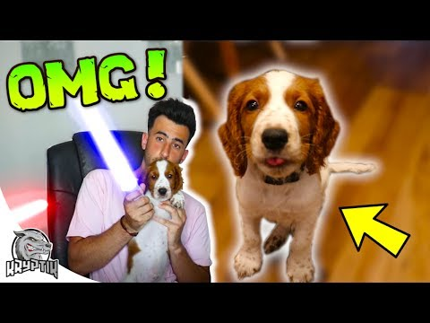 OUR NEW PUPPY! - (socially acceptable to edit lightsabers onto my puppy😂?)