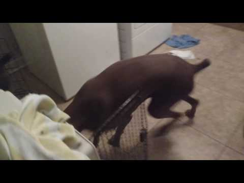 How to crate train a dog