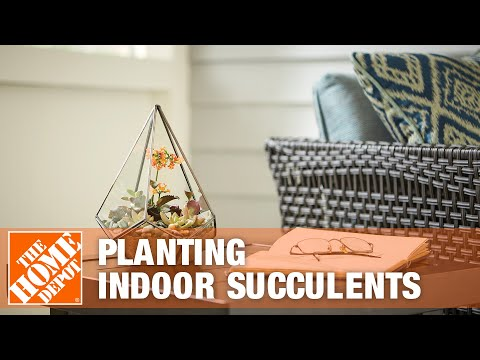 Indoor Succulents: Tips and Tricks