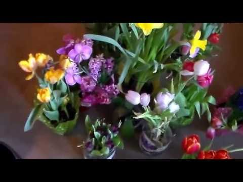 learn my way to buy flowers cheap for the bulbs Going Off Grid My Way