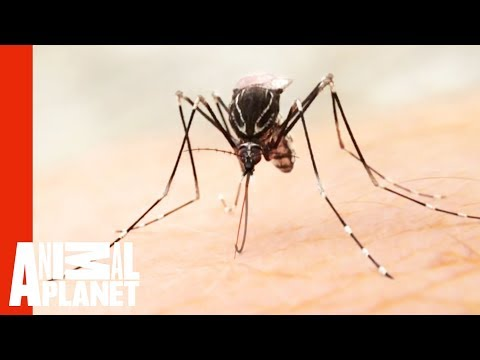 The Devastating Effects Of The Zika Virus | Monsters Inside Me
