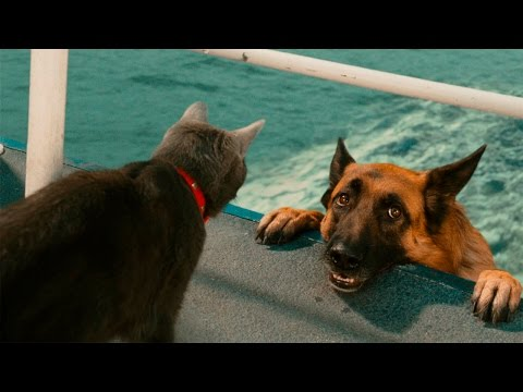 Funny Cats And Dogs - Funny Cats vs Dogs - Funny Animals Compilation