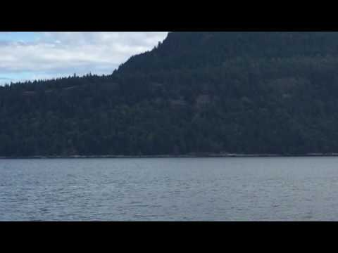 Killer whales off Vancouver Island BC