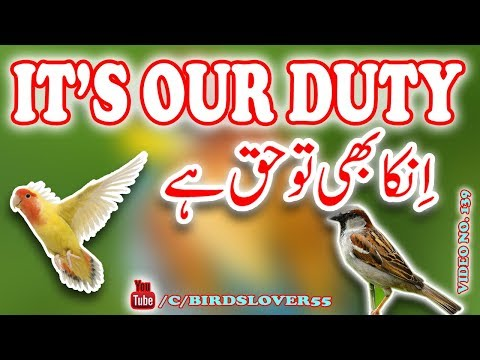 Save Birds in Summer. how to care wild birds in summer. Video No. 139