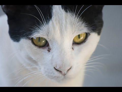 Sneezing Cat? 5 Effective Home Remedies