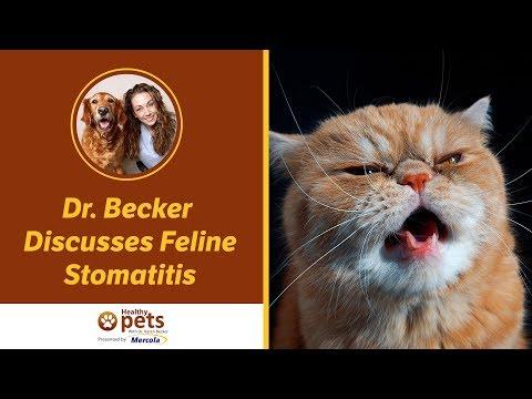 Dr. Becker Discusses Feline Stomatitis