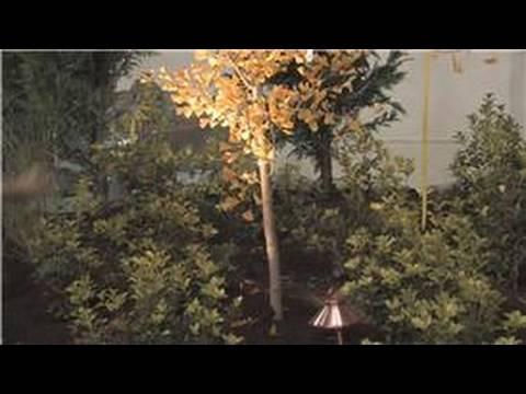 Flower Garden Tips : Ideas For Garden Lighting