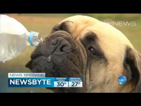 Queensland Afternoon Newsbyte