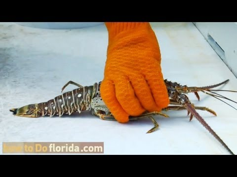 How to Clean A Florida Lobster