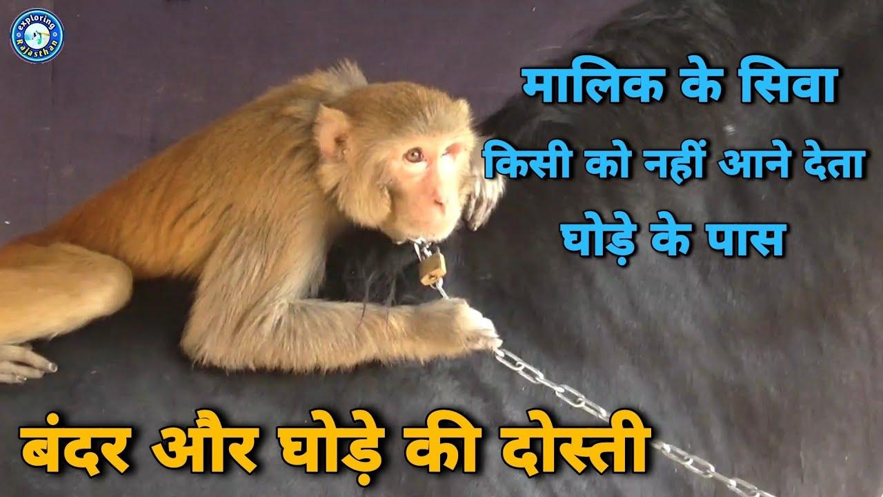 बंदर और घोड़े की एसी दोस्ती कभी देखी है आपने | Monkey and Horse best firnds | गंगानगर मेला