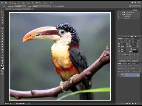 Photoshop - Add Border to Image (White Border or Any Other Color)