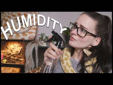 HUMIDITY AND SNAKES (How to get it perfect!)