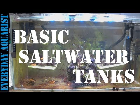 Marine Aquariums can be Easy | Basic Setup for all Experience Levels