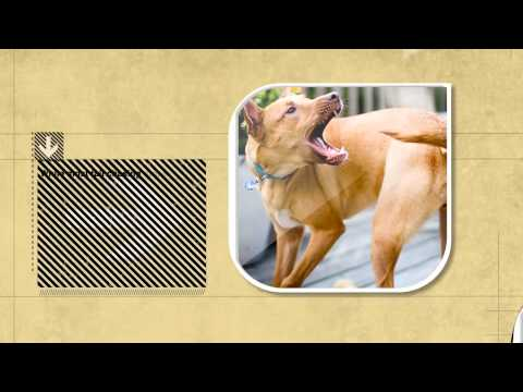 Dog Facts: Reasons Why Dogs Chase Their Tails