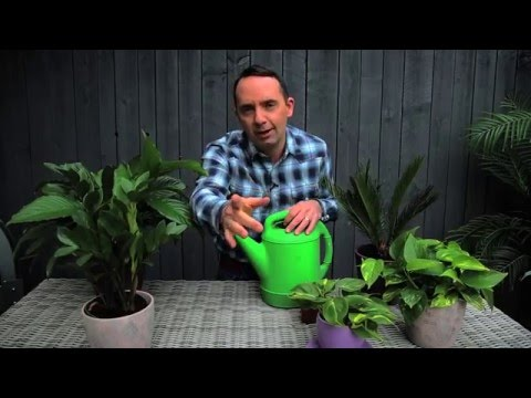 How often should I water my indoor plants?