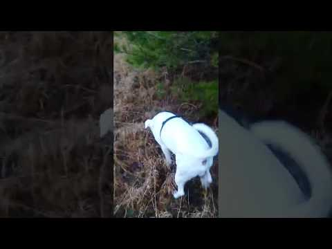Funny Things Dogs Do