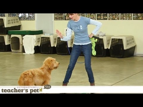 Impulse Control With Games | Teacher's Pet With Victoria Stilwell