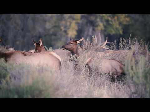 North American Wildlife Conservation Model - Tenet #7