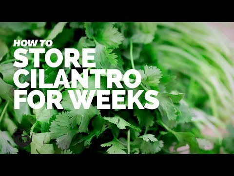 How to Store Cilantro for Weeks