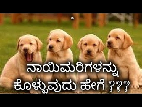 Kannada dog training - ನಾಯಿಮರಿ ಕೊಳ್ಳುವುದು ಹೇಗೆ ? How to choose puppy in Kannada.