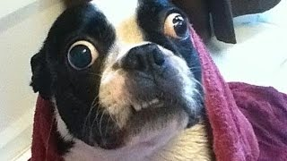 TRY NOT TO LAUGH-Funny Animals Fails Compilation 2016 (Part 12)