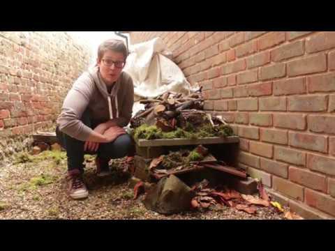 Wildlife Gardening to Help Hedgehogs