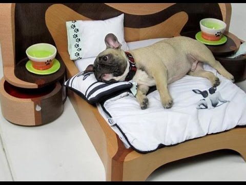 Furniture ideas for PETS