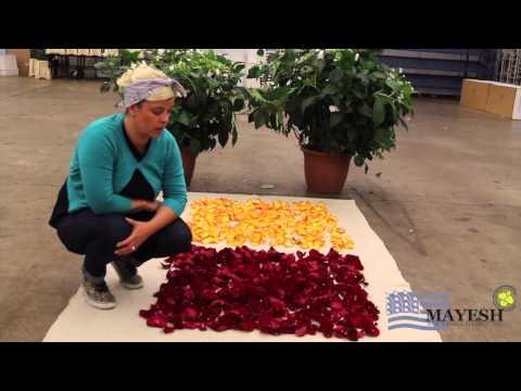 June 2014 Wholesale Flower Product Showcase: Calculating Rose Petals