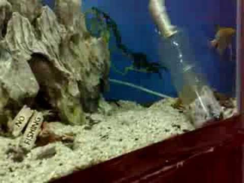 FISH TANK CLEAN. HOW TO CLEAN A FISHTANK