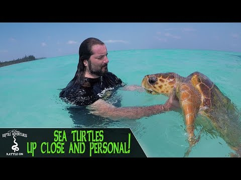 SEA TURTLES! Up close and personal! (New Caledonia, 2018)