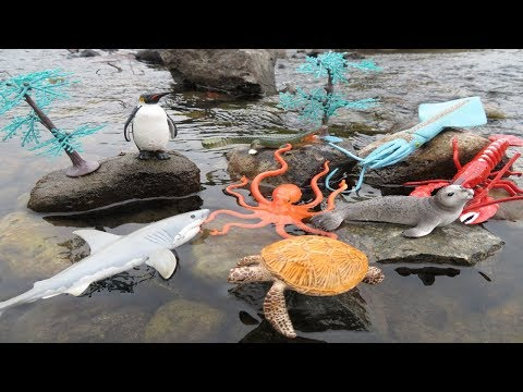 Learn Sea Animals Names For Kids New Toy Videos For Children Real Life Ocean Animal Names And Sounds