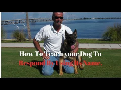 How To Teach Your Dog To Respond By Using Its Name