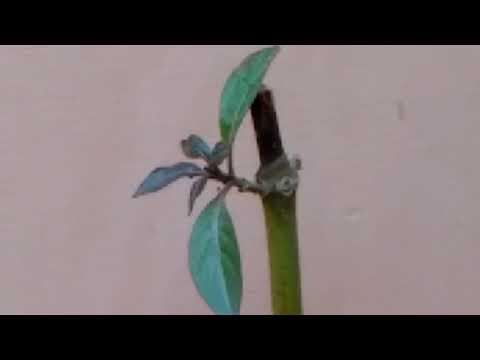 मरते ☠हुए पौधों को ऐसे 🙅बचाए// Tips to save Dying plants