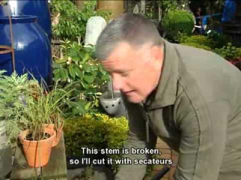 Pasella | Gardening Tips | Cat Friendly Plants