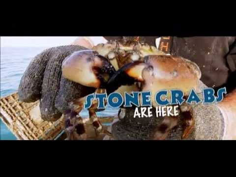 Stone Crab Claws are HERE!
