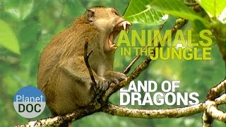 Animals of the Jungle. Land of Dragons | Nature - Planet Doc Full Documentaries